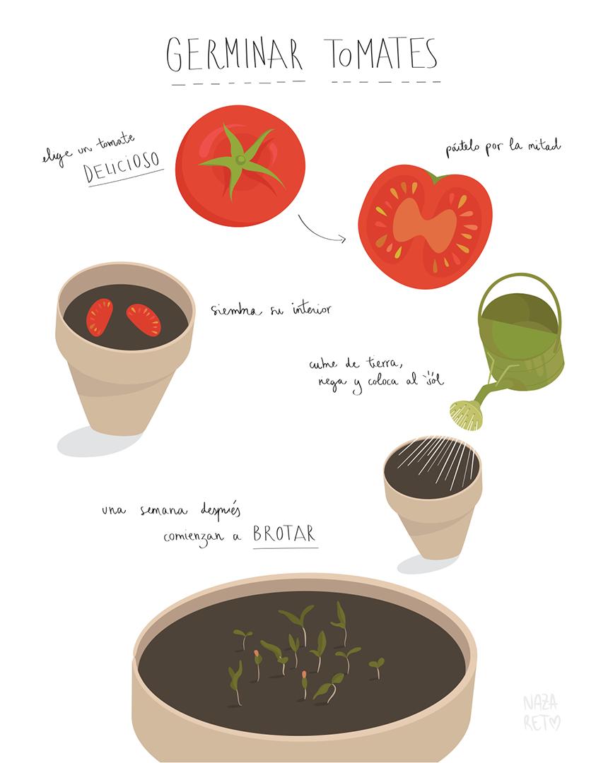 germinar-tomates